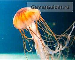 94% медуза