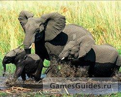 94% слоны