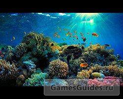 94% подводный мир